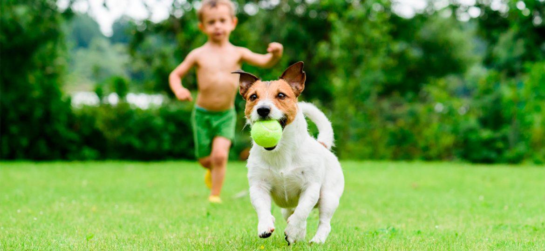 ¿Amas a tu mascota? ¡Diviértete jugando con ella!